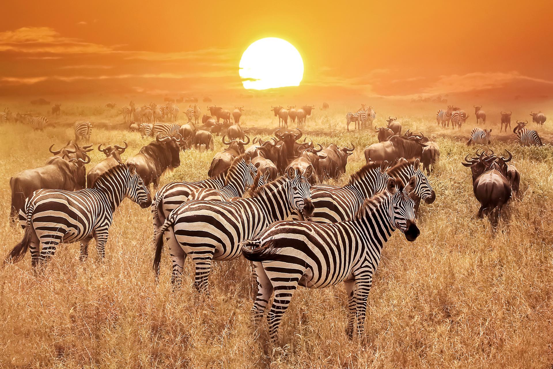 Tansania-Reise bei Carus Reisen buchen